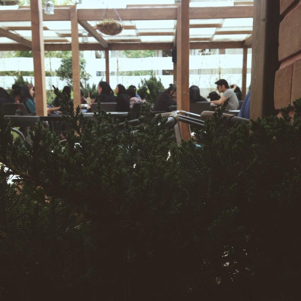 cafe land 14