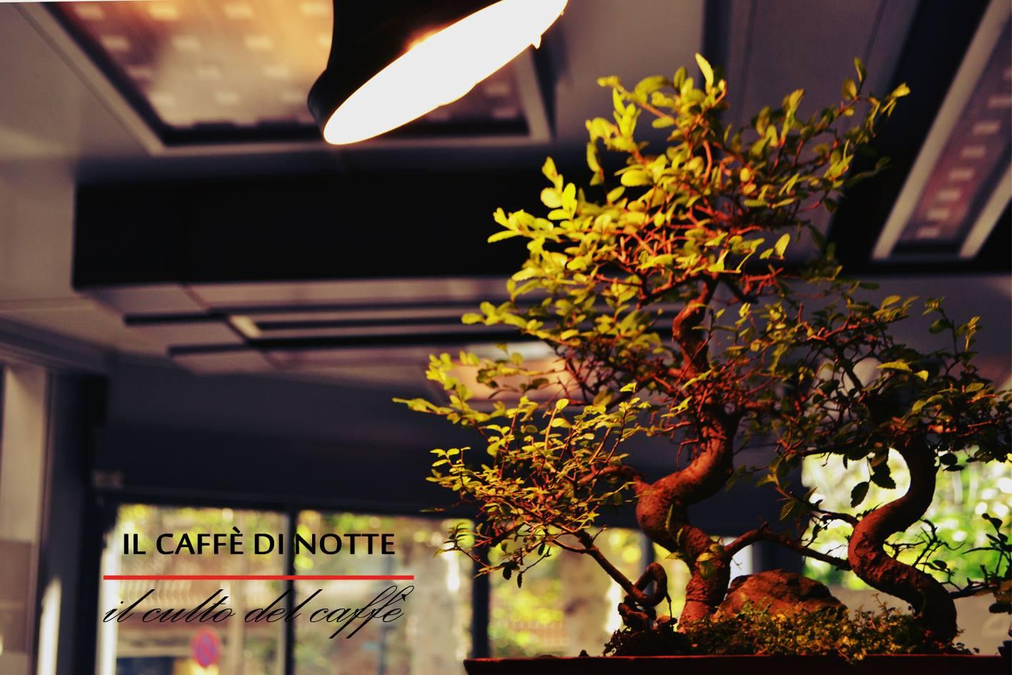 il caffe 33