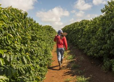 نگرانی وارد کنندگان قهوه از شرایط برداشت بخاطر ویروس کرونا